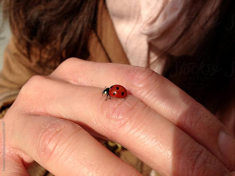 ladybug walking on girl's hand by Tommaso Tuzj for Stocksy United