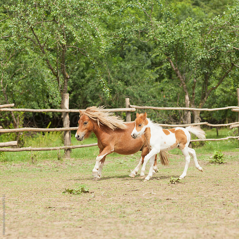 Horses running on the farm. by Mosuno for Stocksy United
