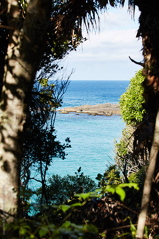 Sea view between some trees by Joaquim Bel for Stocksy United