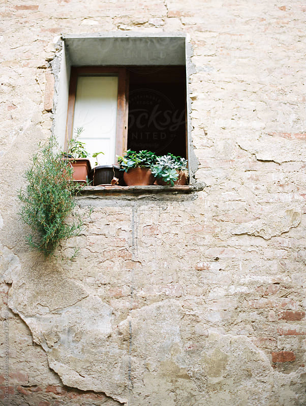 Plants on a window in Siena by Kirstin Mckee for Stocksy United