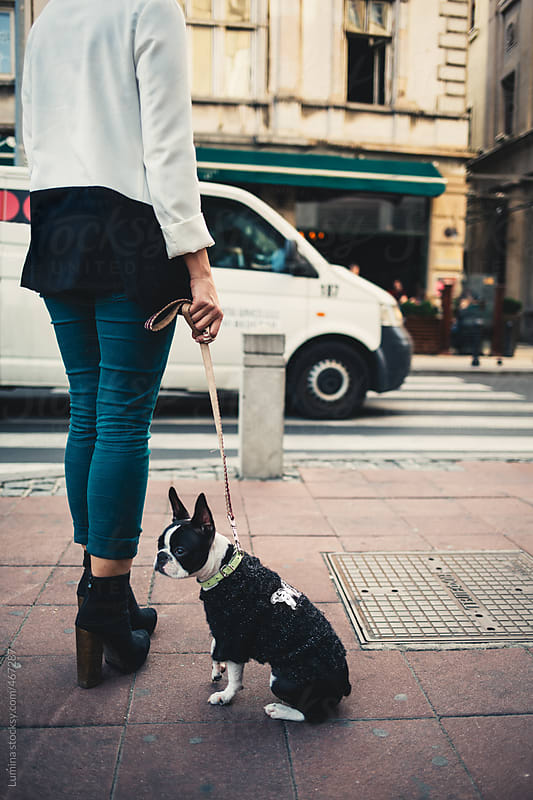 Chic Woman Walking Her Dog by Lumina for Stocksy United