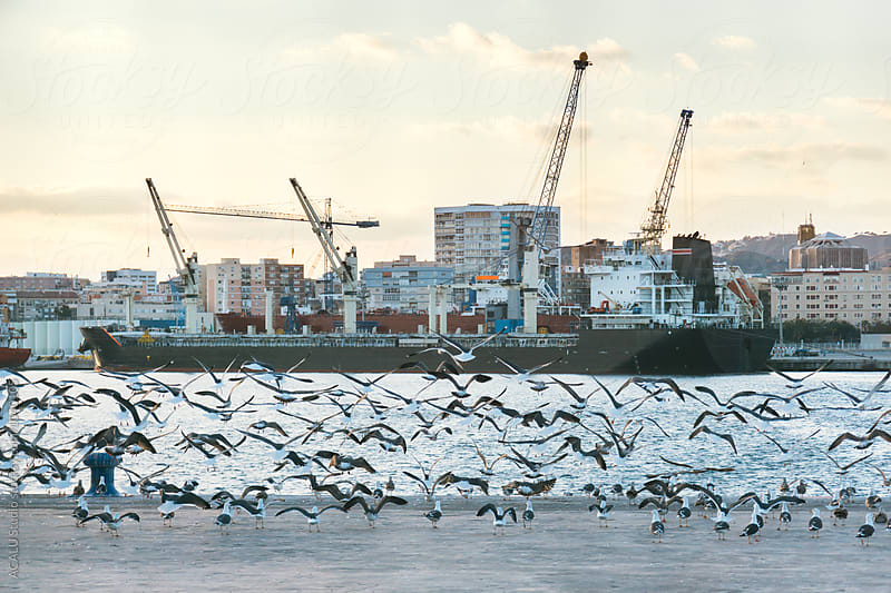 Seagulls taking flight at the port by ACALU Studio for Stocksy United