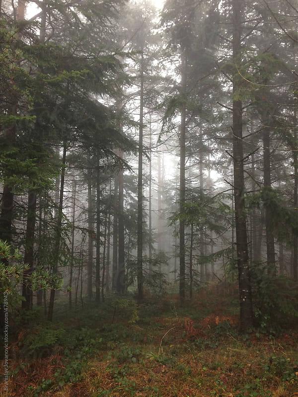 Forest at winter time by Branislav Jovanović for Stocksy United