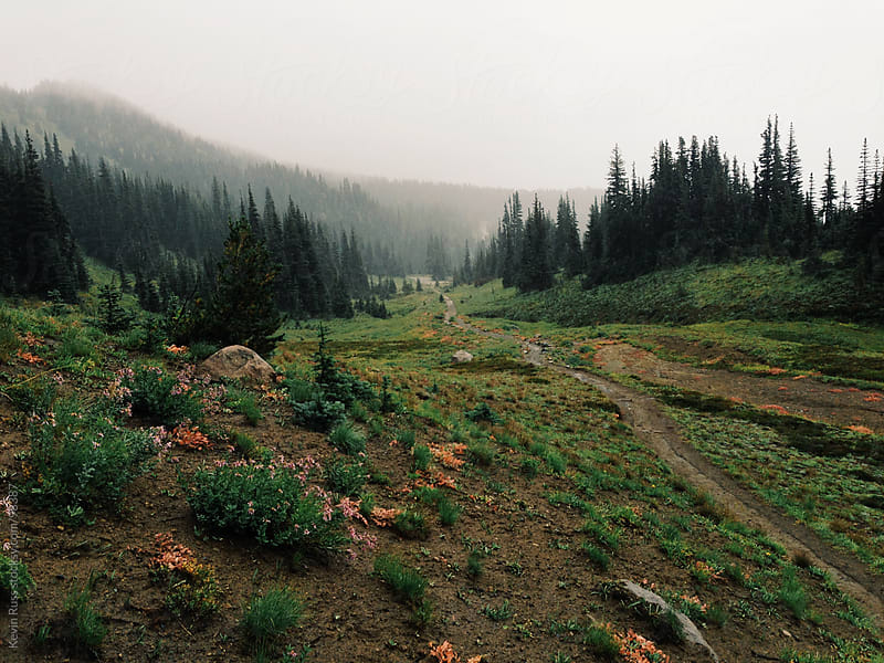 Washington Meadow Trail by Kevin Russ for Stocksy United