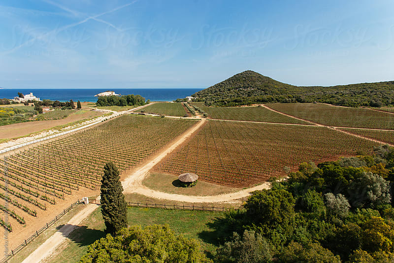 Vineyard near old rock tower by Marko Milovanović for Stocksy United