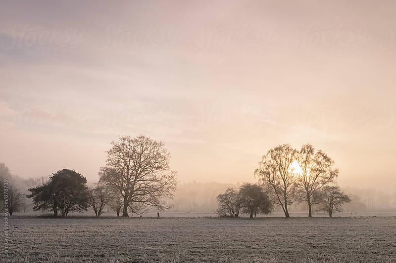 Sunrise through fog on a frosty morning. Santon Downham, Norfolk, UK. by Liam Grant for Stocksy United