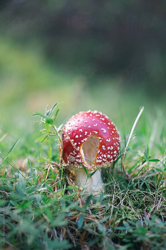 detail of a mushroom in the forest by Javier Pardina for Stocksy United
