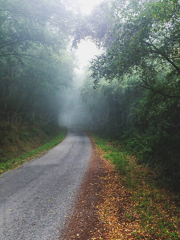 Road in the wood in a foggy day by Luca Pierro for Stocksy United