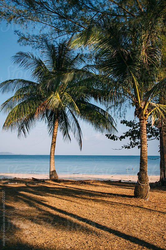 Palm trees on a tropic island by michela ravasio for Stocksy United