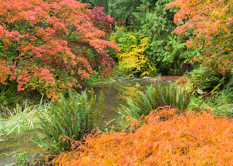 Arboretum color change in Autumn by Mark Windom for Stocksy United