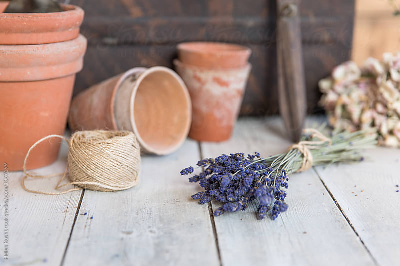 Lavender flowers with clay pots and gardening equipment by Helen Rushbrook for Stocksy United