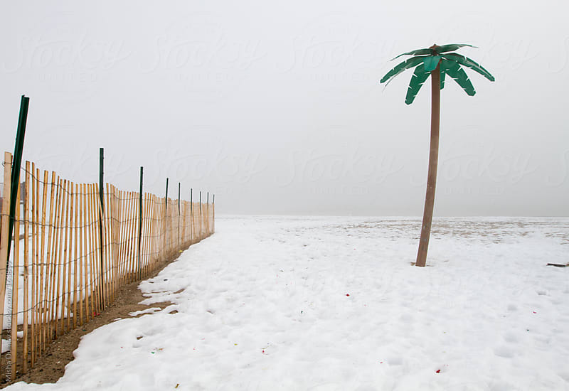 Fake palm tree on a snow-covered beach by Mihael Blikshteyn for Stocksy United