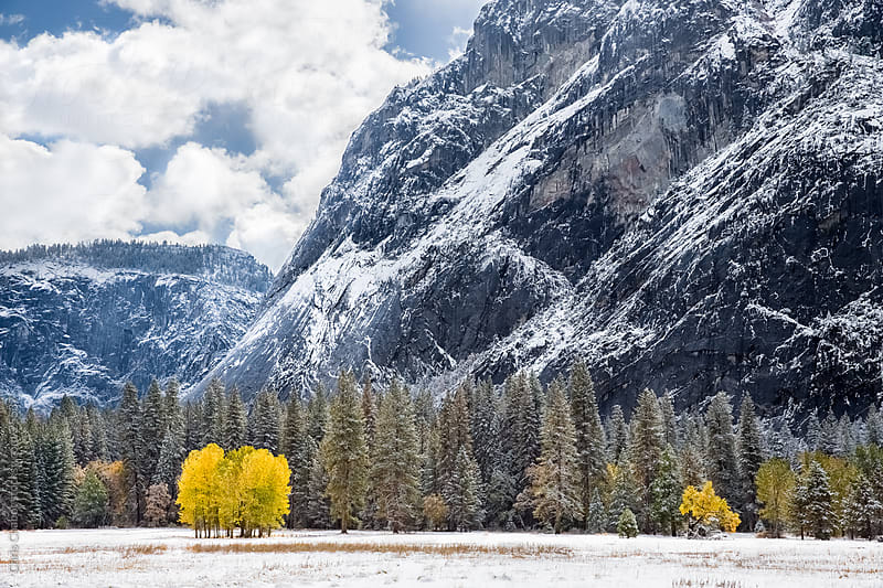 Two yellow trees sticking out in a winter Yosemite Valley by Chris Chabot for Stocksy United