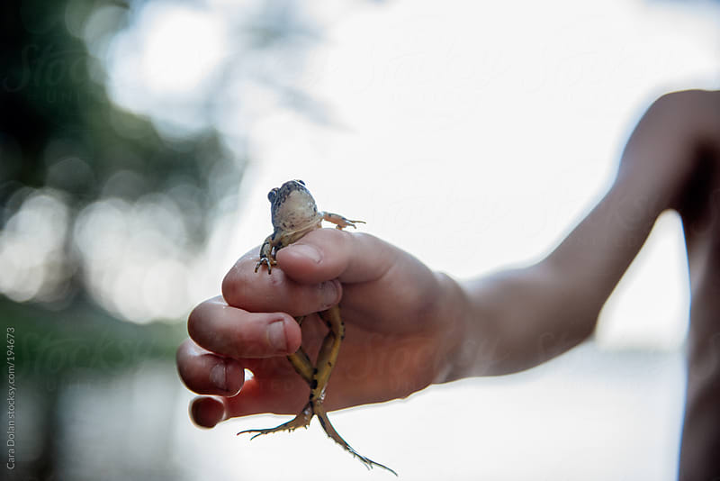 Child holds out a frog he just caught in a pond by Cara Dolan for Stocksy United