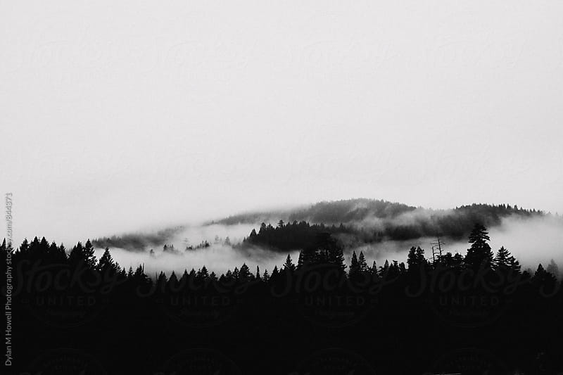 Clouds over Tree Tops by Dylan M Howell Photography for Stocksy United