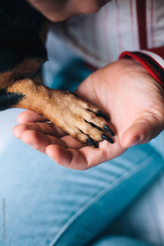 Male hand holding the dog paw by VeaVea for Stocksy United