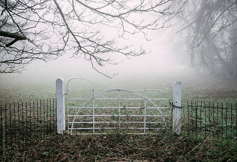 White field gate beside a field in fog. Norfolk, UK. by Liam Grant for Stocksy United