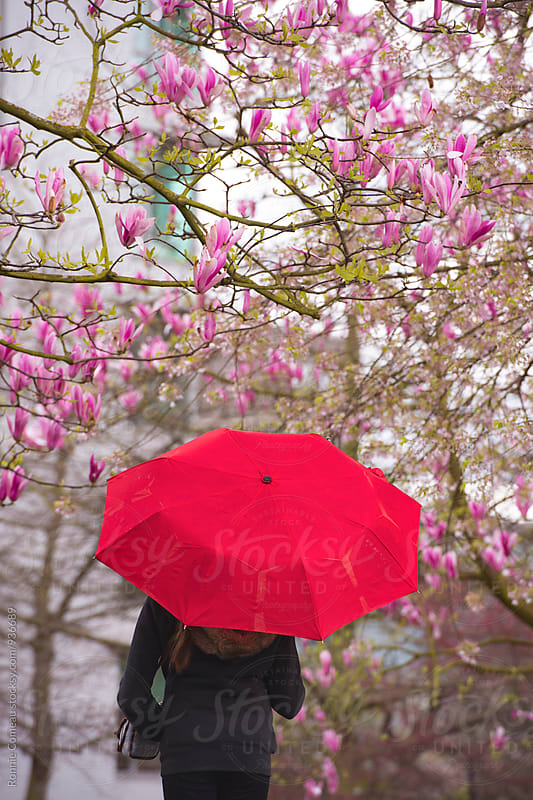 Red Umbrella Under Blossoming Trees by Ronnie Comeau for Stocksy United