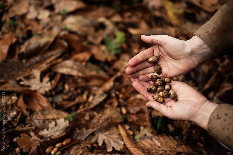 Fallen acorns in palms of hands  by Kristen Marie Parker for Stocksy United