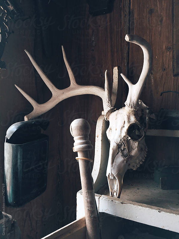 An old dead animal skull with antlers by Greg Schmigel for Stocksy United