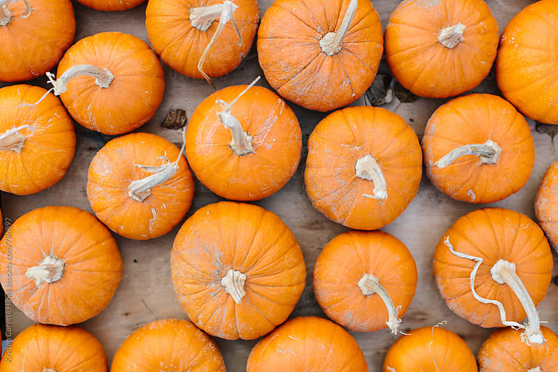 mini pumpkins by Kristen Curette Hines for Stocksy United