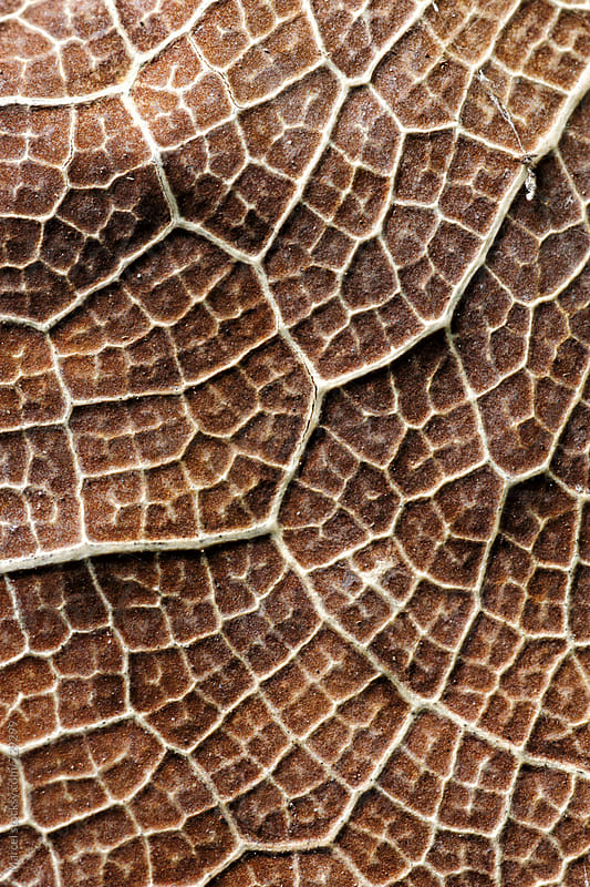 Macro of a wrinkled brown leaf by Marcel for Stocksy United