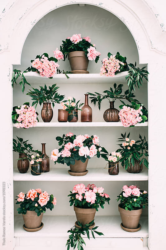 white shelves full of flower pots by Thais Ramos Varela for Stocksy United