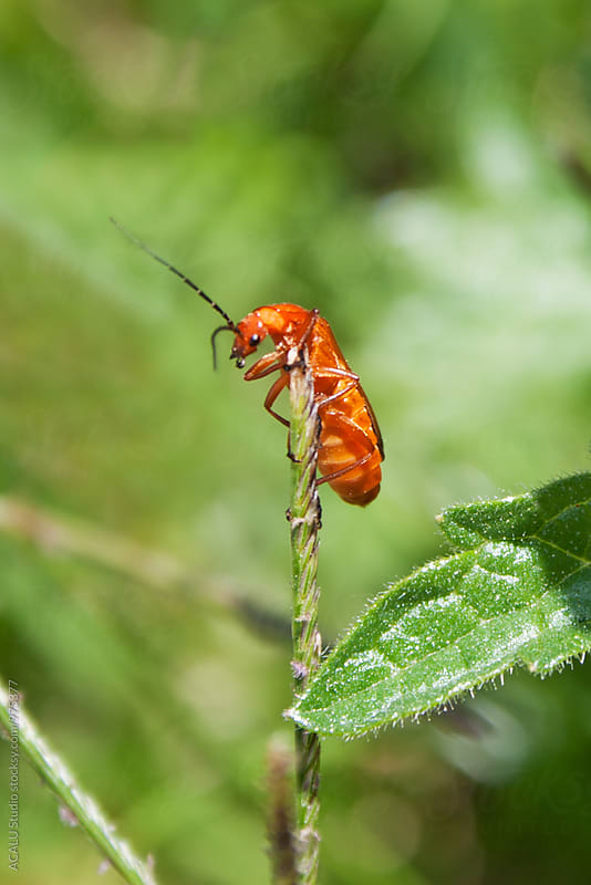 Small orange bug on a branch by ACALU Studio for Stocksy United