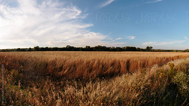 wide view of Indiana landscape in autumn by Brian Powell for Stocksy United
