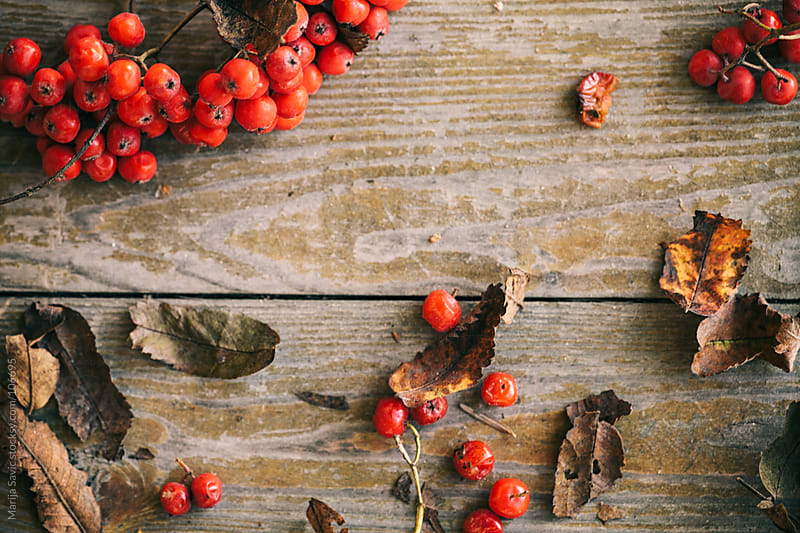 Red berries on old wooden background.  by Marija Savic for Stocksy United