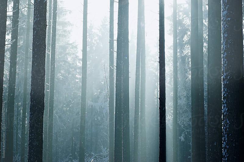 Winter forest in the morning by Robert Kohlhuber for Stocksy United
