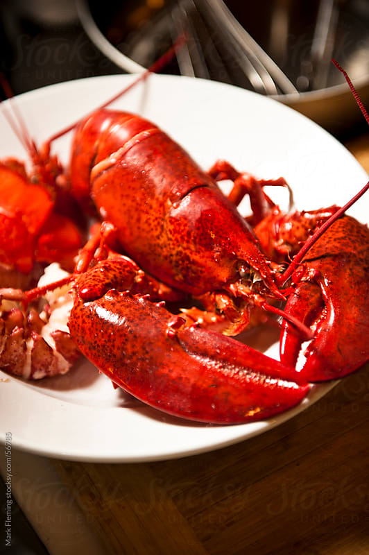 Maine Lobster by Mark Fleming for Stocksy United