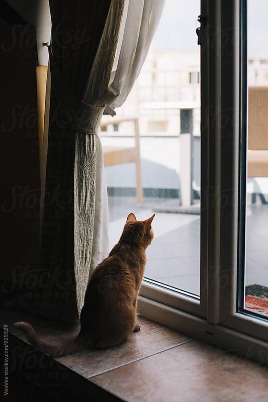 Cat looking through the glass door indoor by Marija Mandic for Stocksy United