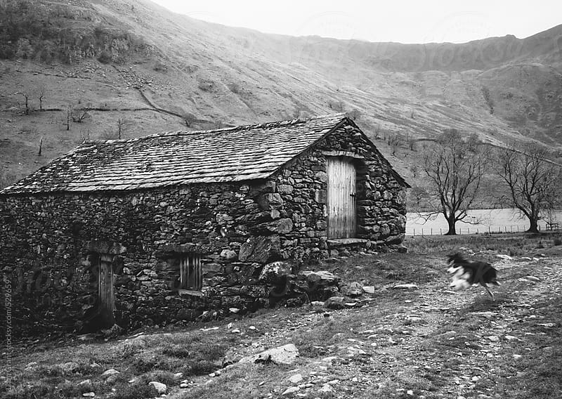 Sheep dog runs past an old stone barn on a remote hillside. by Liam Grant for Stocksy United
