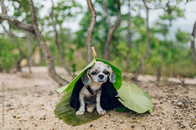 A cute puppy dog standing in the rain wearing a leaf raincoat by Blue Collectors for Stocksy United