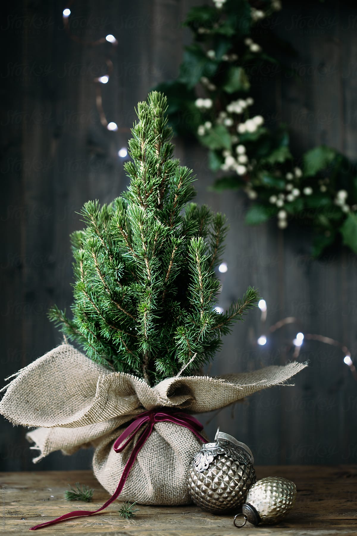 Christmas Tree Wrapped In Burlap By Ruth Black Christmas Christmas Tree Stocksy United