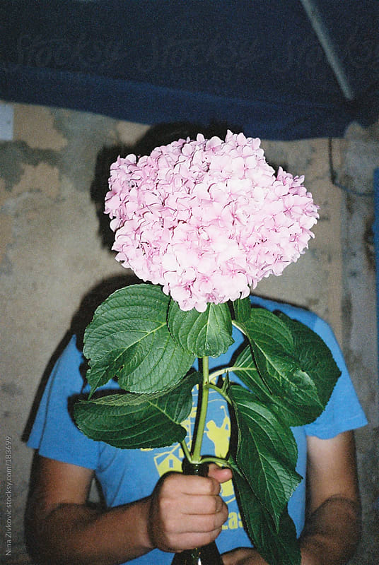 Holding a Hydrangea flower. by Nina Zivkovic for Stocksy United