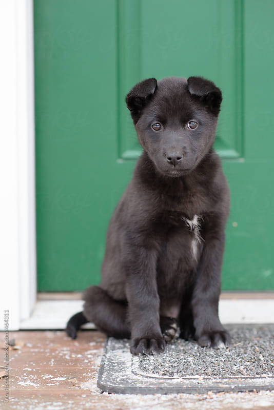 black puppy sits in front of a green door by Tara Romasanta for Stocksy United