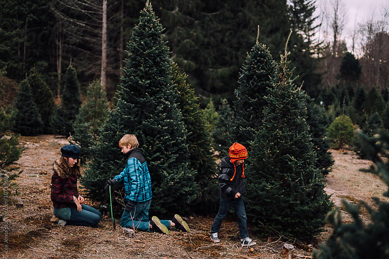 kids getting christmas tree by Léa Jones for Stocksy United
