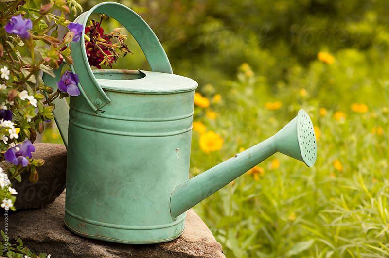 Watering Can by Rob Sylvan for Stocksy United