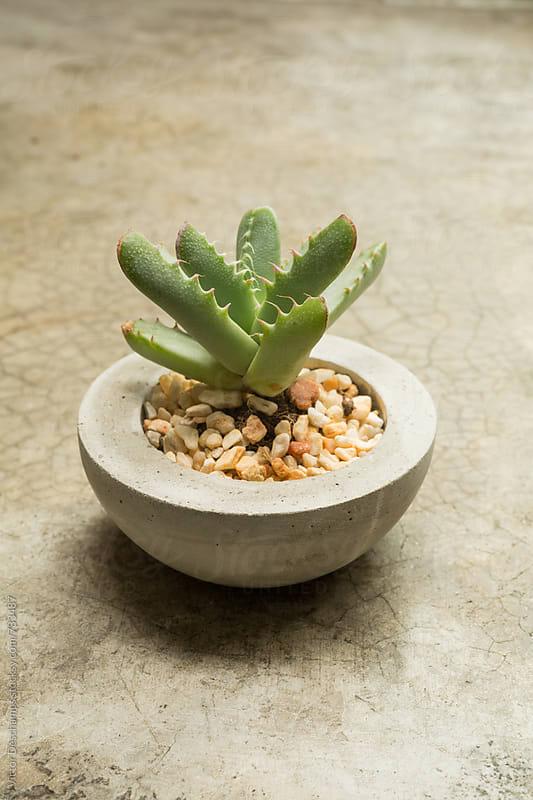 Tiny Plant in a Concrete Pot by Victor Deschamps for Stocksy United