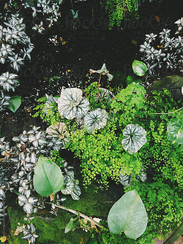 Lush Green Plants by Tina Crespo for Stocksy United