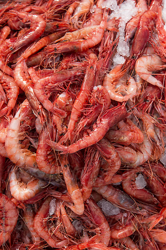 Red prawns on a market by Bisual Studio for Stocksy United