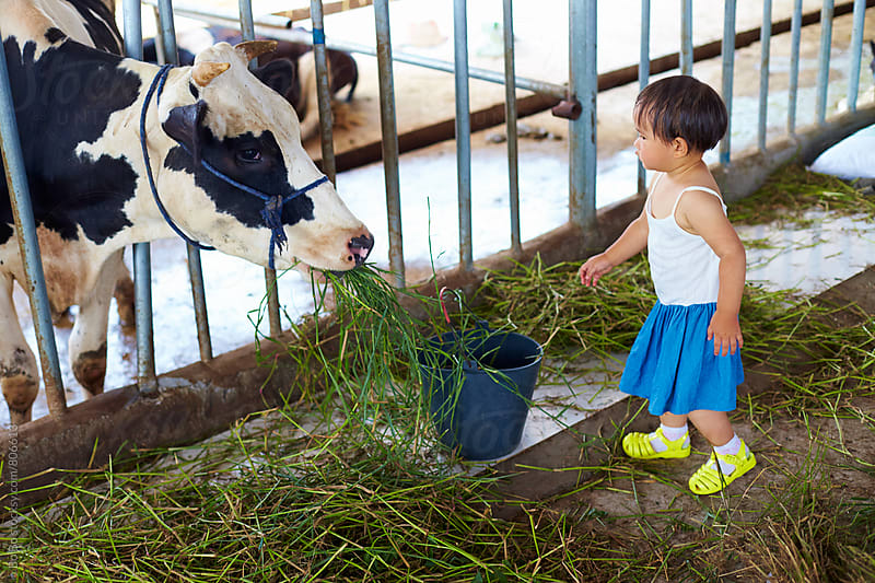 one little asian girl working in the dairy farm by Bo Bo for Stocksy United