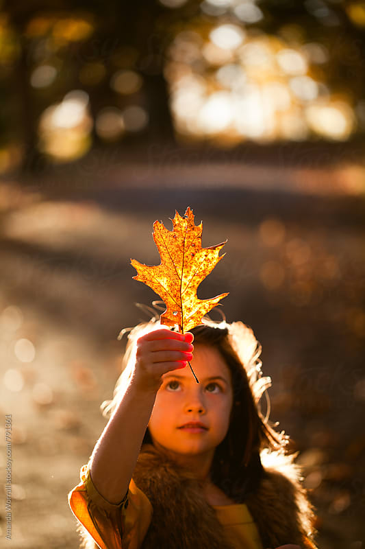 Girl inspecting a fall leaf that is being illuminated by the evening sunlight by Amanda Worrall for Stocksy United