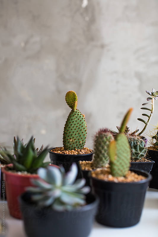 Vertical view of a group of little pots with succulents  by Jovo Jovanovic for Stocksy United