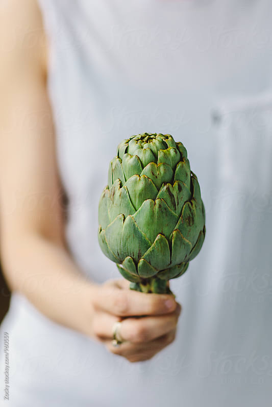 Artichoke in hand  by Zocky for Stocksy United