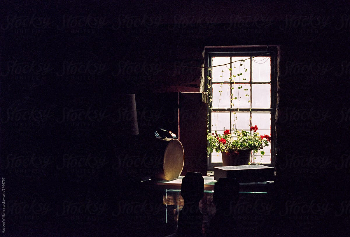 Small Potted Plant Sitting In Dark Room By Brightly Lit