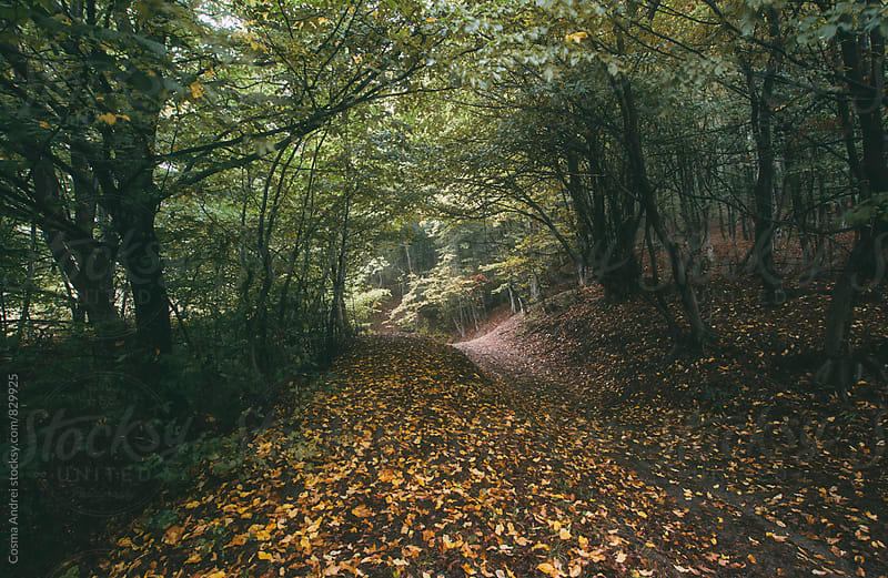 Autumn road trough forest by Cosma Andrei for Stocksy United