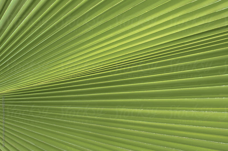 Green palm tree leaf background pattern by Per Swantesson for Stocksy United